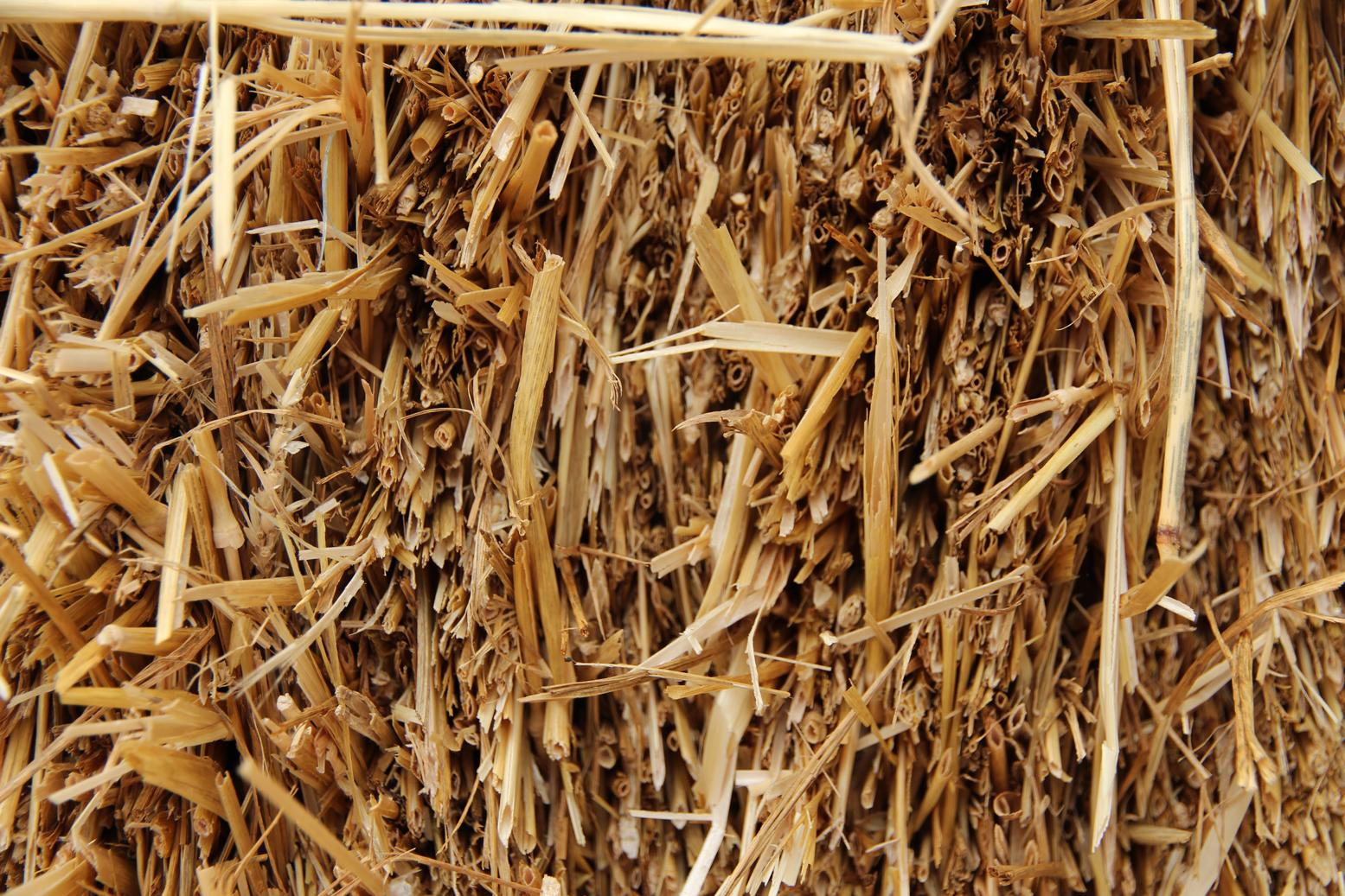 Paille : les pailles de céréales, déchets agricoles disponibles en circuit court