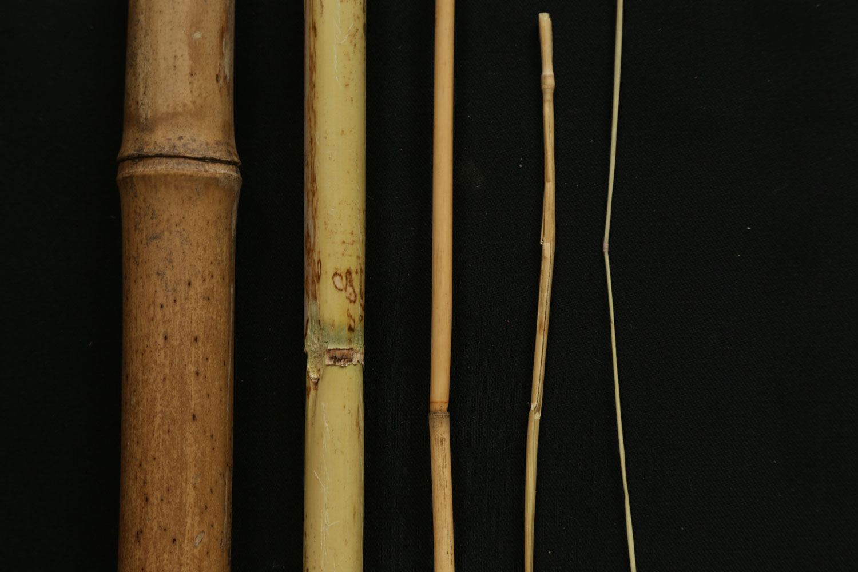 Les graminées : du brin d'herbe au bambou